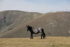 Alpung von Pferden - Worauf zu achten ist @ Eggeralm | Tirol | Österreich